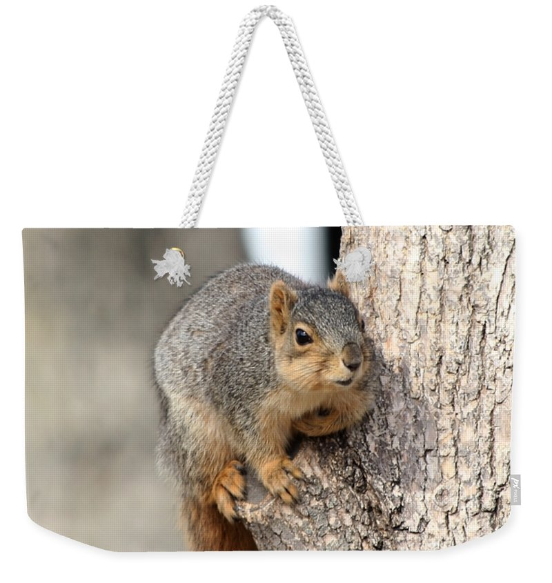 Squirrels Weekender Tote Bag featuring the photograph Squirrel by Lori Tordsen