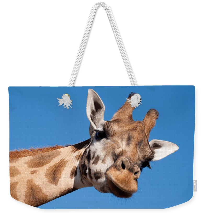 Mammal Weekender Tote Bag featuring the photograph Giraffe by FL collection