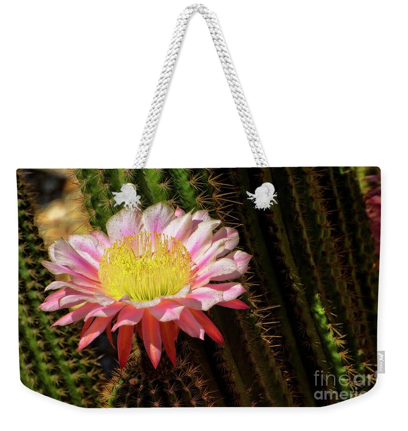 Cactus Weekender Tote Bag featuring the photograph Pink Cactus Flower by Jim And Emily Bush