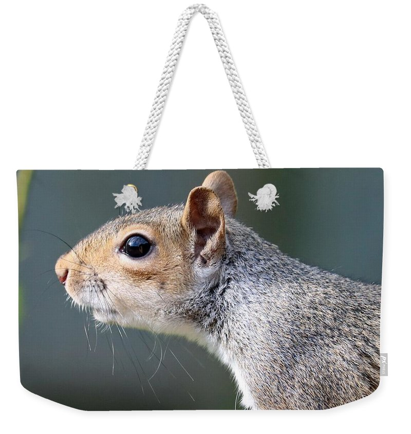 Squirrel Weekender Tote Bag featuring the photograph Squirrel by FL collection