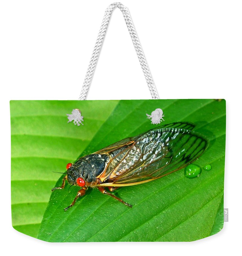 17 Weekender Tote Bag featuring the photograph 17 Year Periodical Cicada by Douglas Barnett