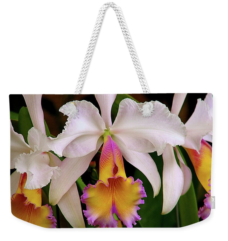 Flowers Weekender Tote Bag featuring the photograph 180 Degrees by Blair Wainman