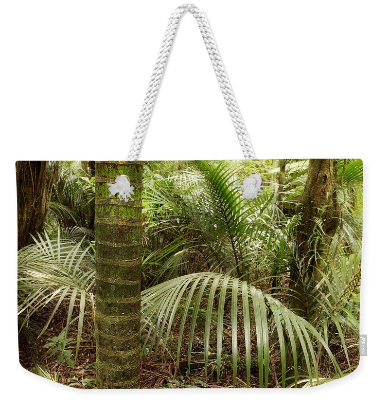 Rain Forest Weekender Tote Bag featuring the photograph Jungle by Les Cunliffe