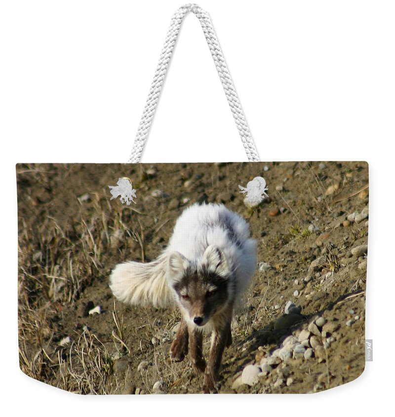 Arctic Fox Weekender Tote Bag featuring the photograph Arctic Fox by Anthony Jones