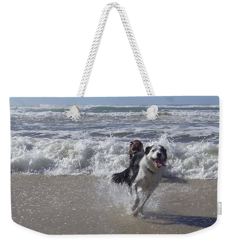 Australia Weekender Tote Bag featuring the photograph Australia - Border Collie Runs Out Of The Surf by Jeffrey Shaw