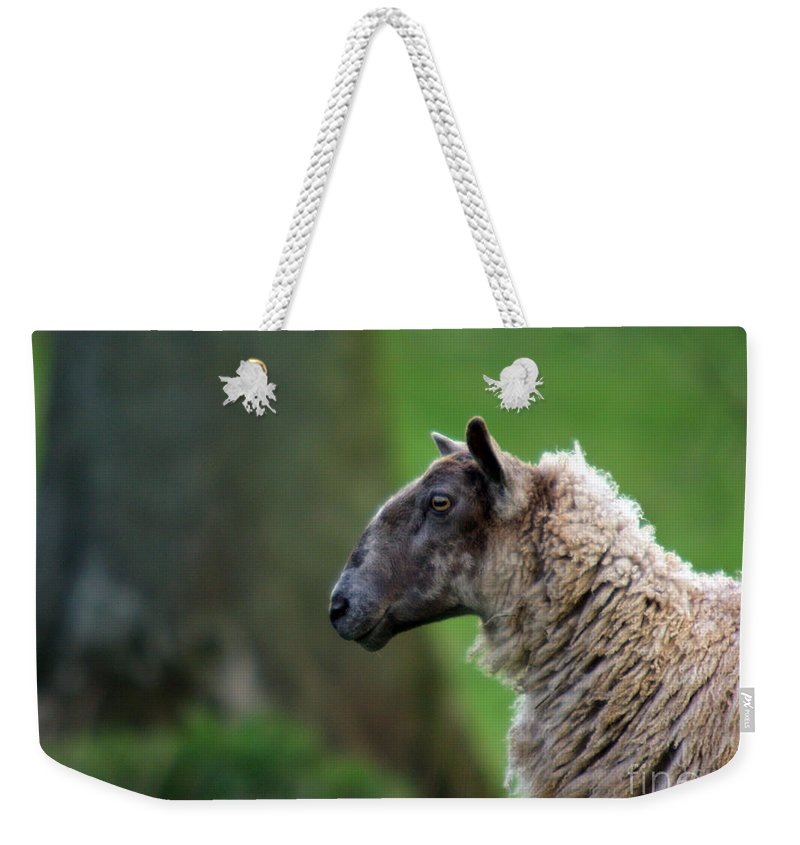 Sheep Weekender Tote Bag featuring the photograph Baa Baa by Angel Ciesniarska