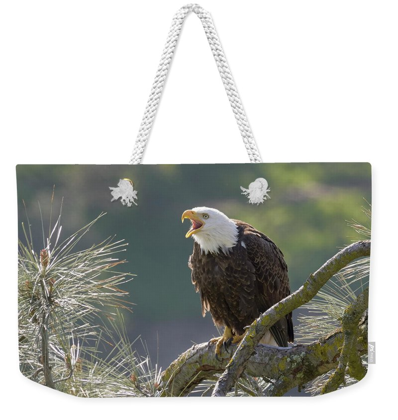 Birds Weekender Tote Bag featuring the photograph Bald Eagle by Doug Herr