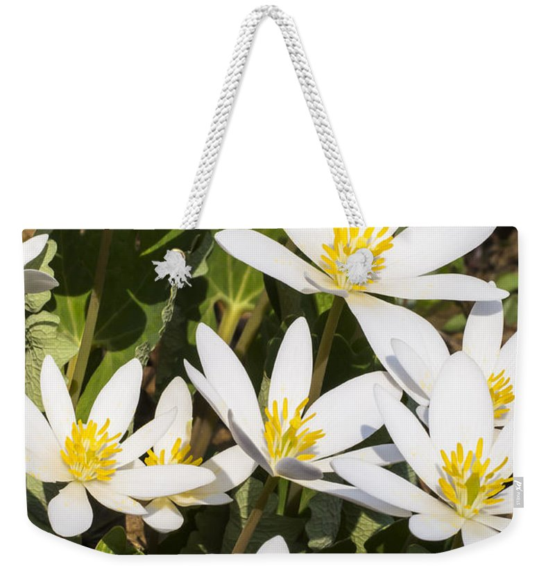 Flowers Weekender Tote Bag featuring the photograph Bloodroot Flowers 2 by Steven Ralser