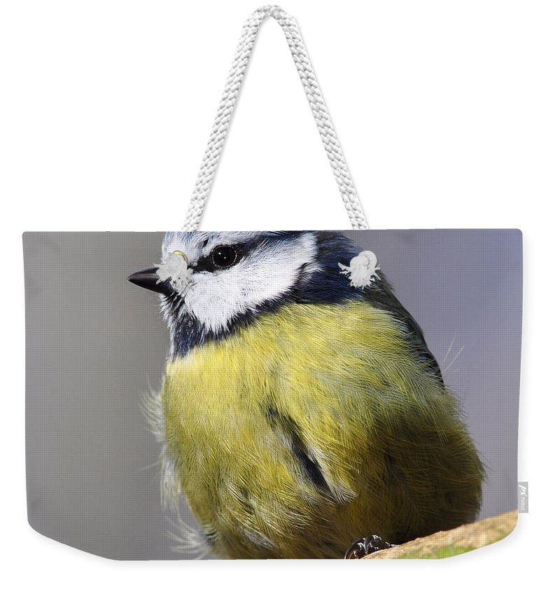 Blue Tit Weekender Tote Bag featuring the photograph Blue Tit by Gavin Macrae