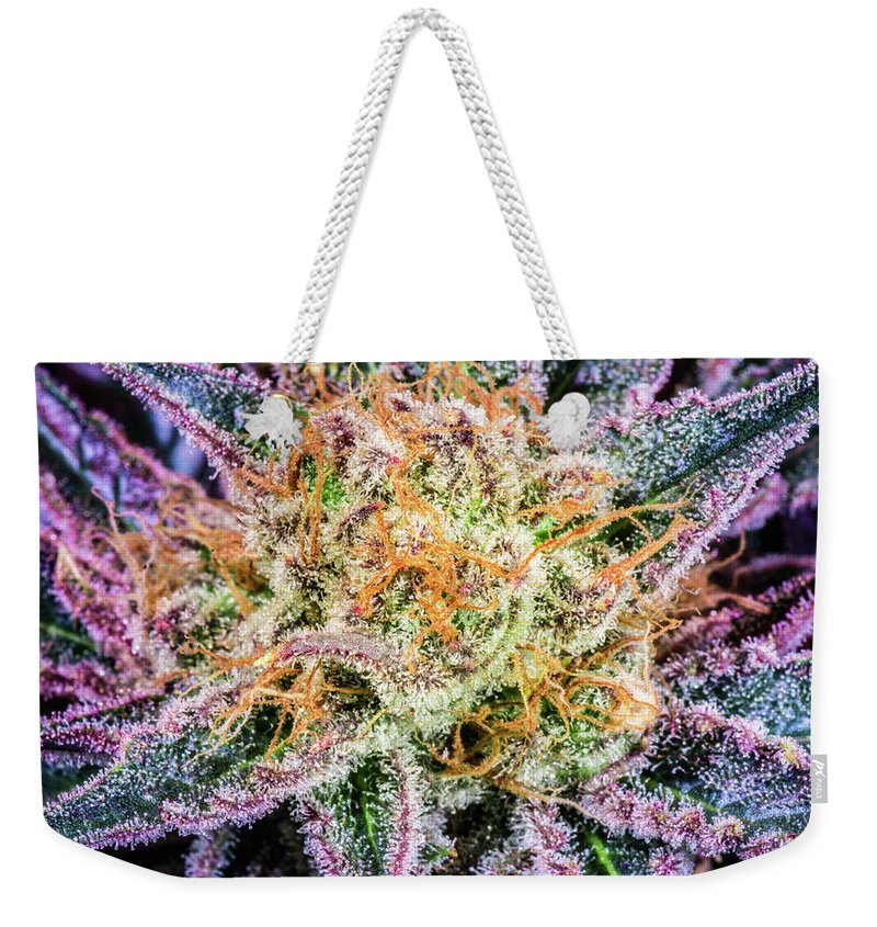 Cannabis Weekender Tote Bag featuring the photograph Cannabis Varieties by Mitch McMaster