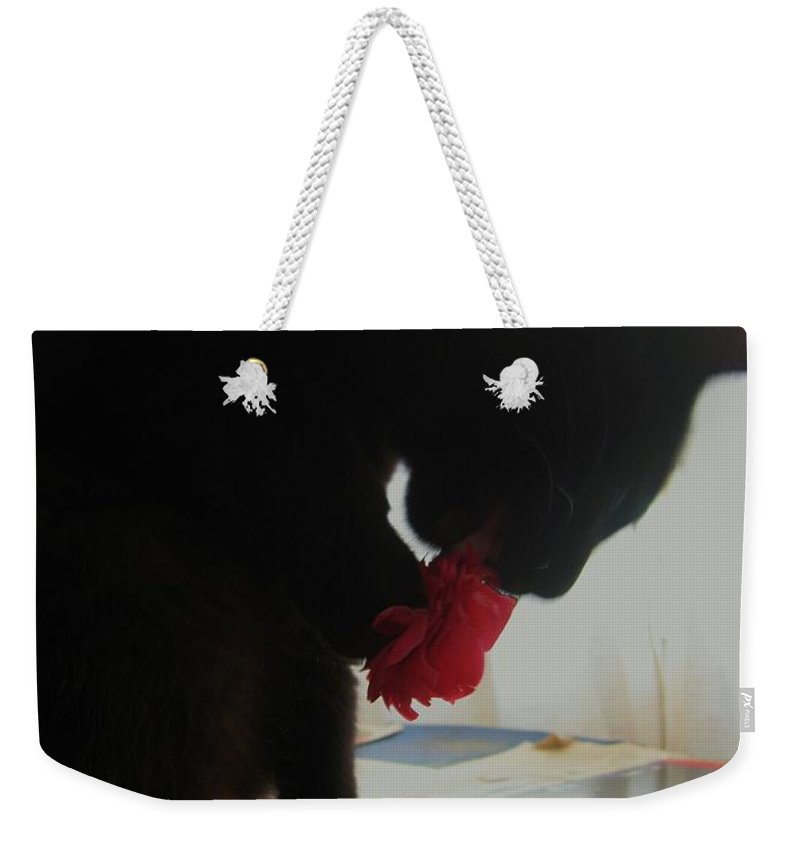 Photograph Cat Black Red Flower Camellia Weekender Tote Bag featuring the photograph Cat Eating Camellia by Seon-Jeong Kim