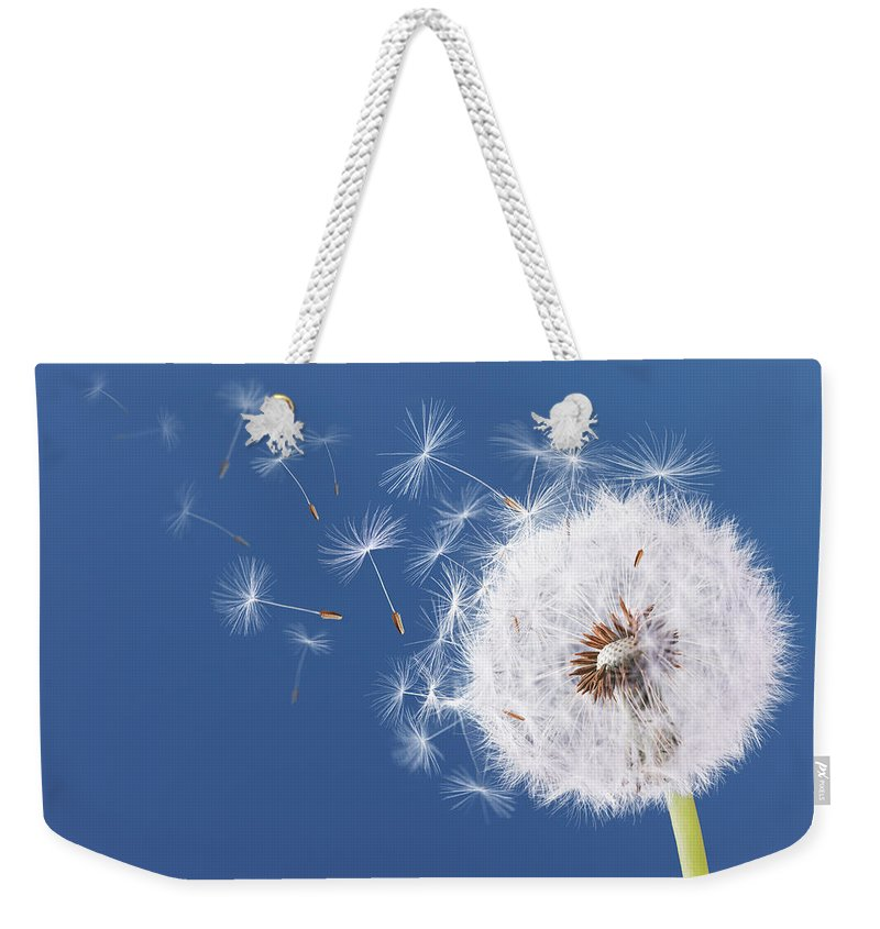 Abstract Weekender Tote Bag featuring the photograph Dandelion Flying On Blue Background by Bess Hamiti