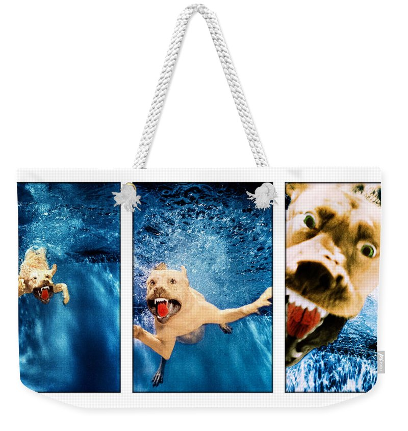 Dog Weekender Tote Bag featuring the photograph Dog Underwater Series by Jill Reger