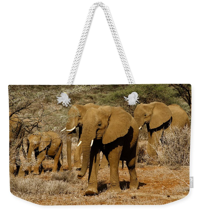 Africa Weekender Tote Bag featuring the photograph Elephant Parade by Michele Burgess