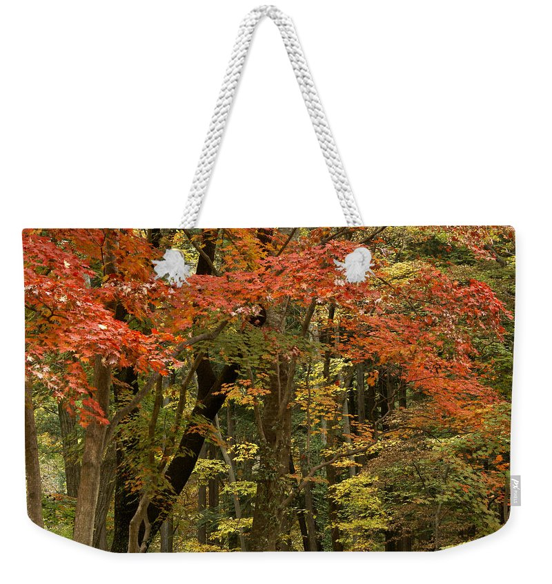 Autumn Weekender Tote Bag featuring the photograph Forest In Autumn by Michele Burgess