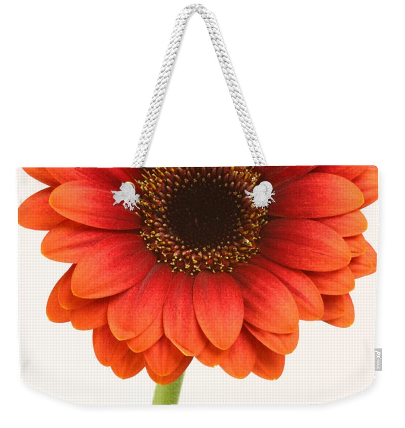 Gerbera Weekender Tote Bag featuring the photograph Gerbera by Chris Smith
