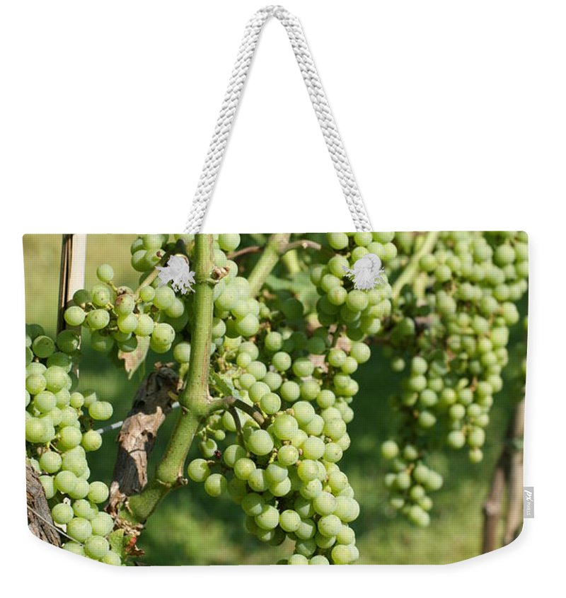 Wine Weekender Tote Bag featuring the photograph Grapevine by Heidi Poulin