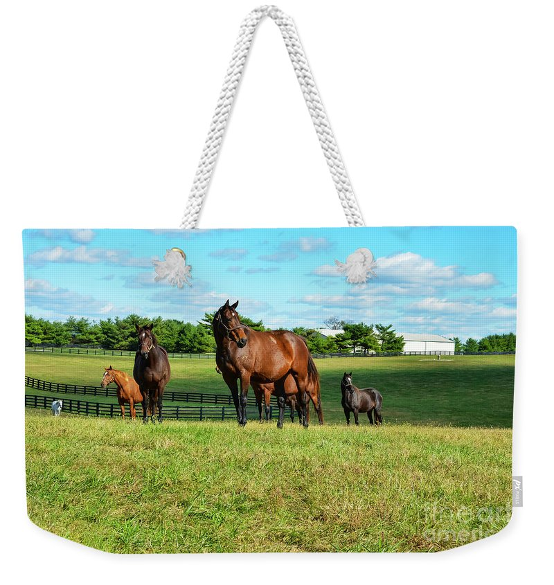 Lexington Weekender Tote Bag featuring the photograph Grazing by Bob Phillips