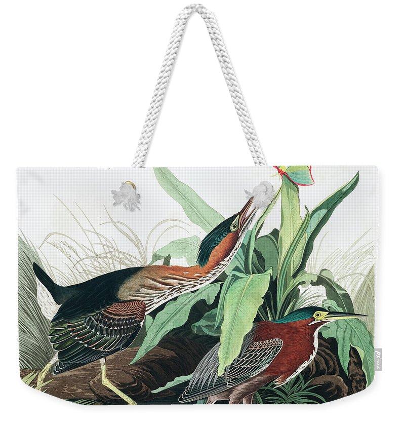 Green Heron Weekender Tote Bag featuring the painting Green Heron by John James Audubon