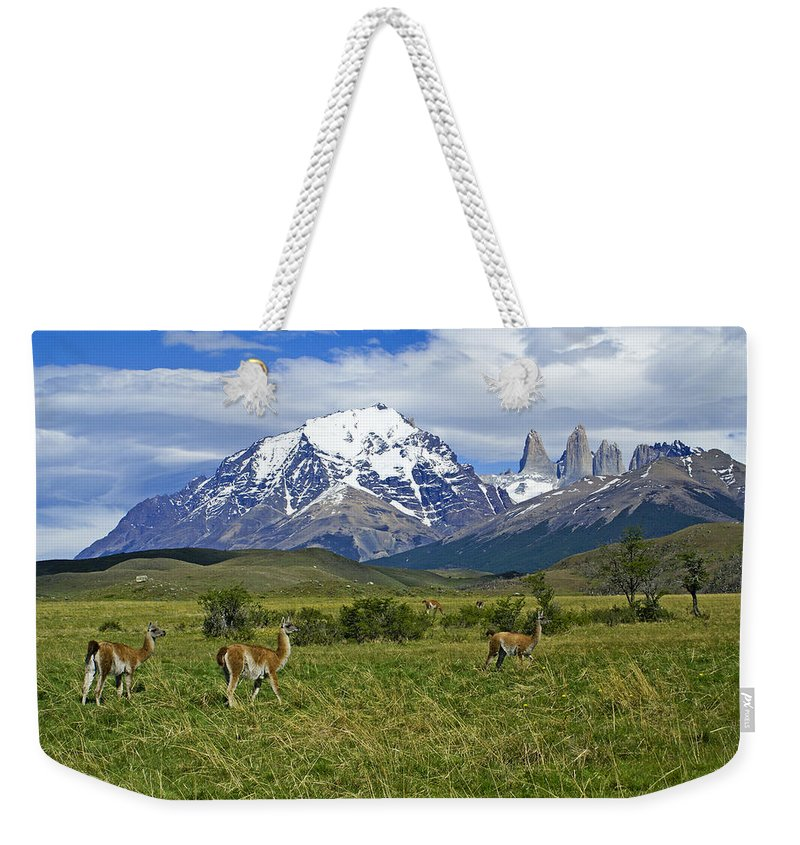 Patagonia Weekender Tote Bag featuring the photograph Guanacos In Torres Del Paine 2 by Michele Burgess