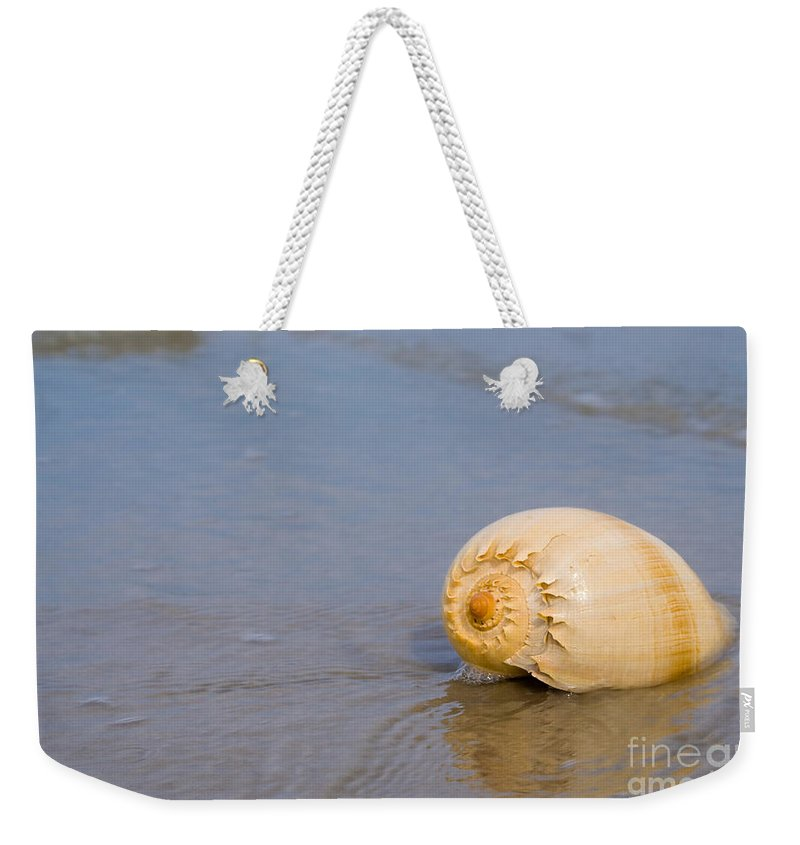 Harp Shell Weekender Tote Bag featuring the photograph Harp Shell On Beach by Anthony Totah