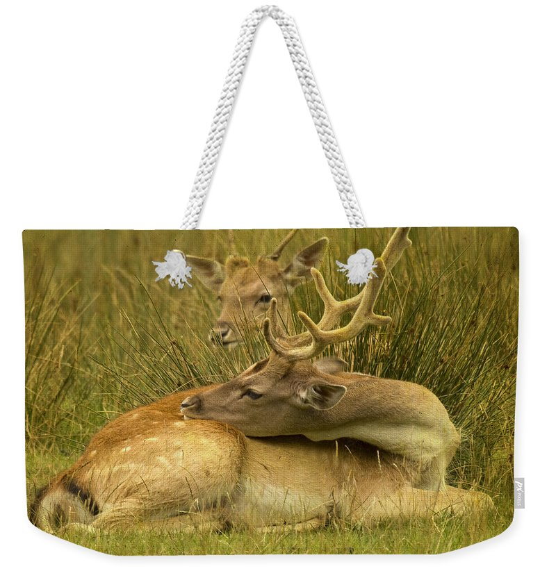 Fallow Deer Weekender Tote Bag featuring the photograph Having A Rest by Angel Tarantella