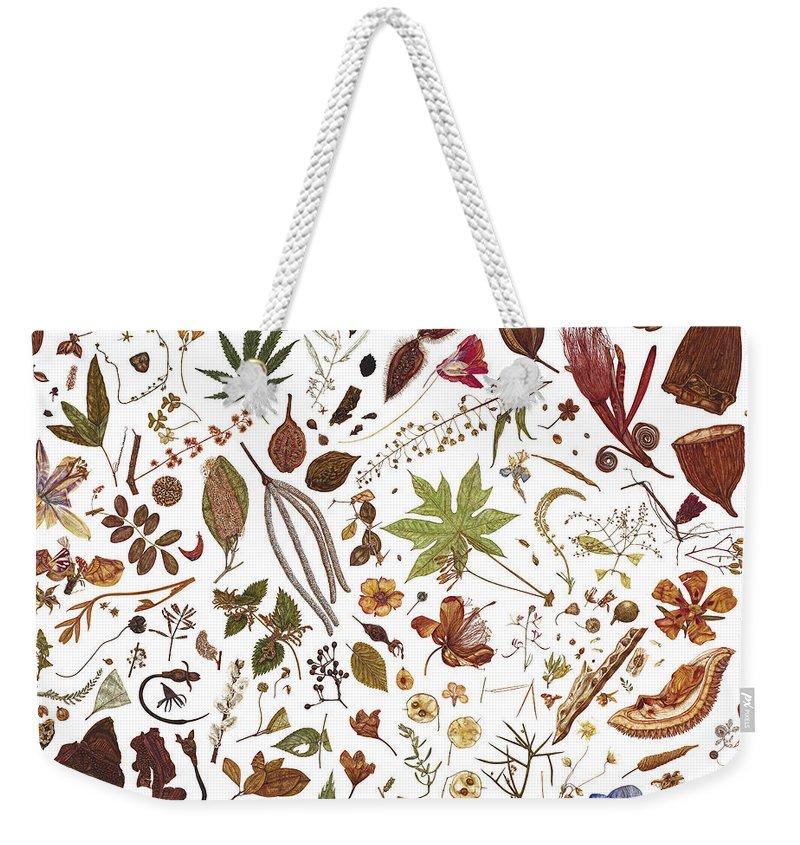 Autumn Weekender Tote Bag featuring the painting Herbarium Specimen by Rachel Pedder-Smith