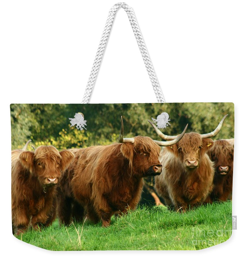 Cow Weekender Tote Bag featuring the photograph Highland Cattle by Angel Ciesniarska