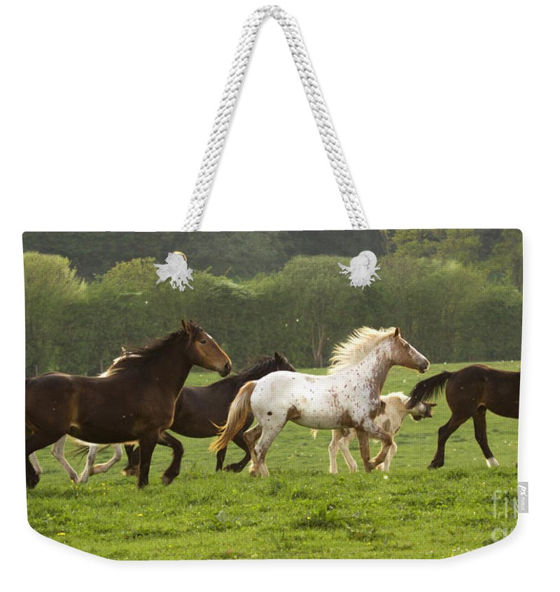 Horse Weekender Tote Bag featuring the photograph Horses On The Meadow by Angel Ciesniarska