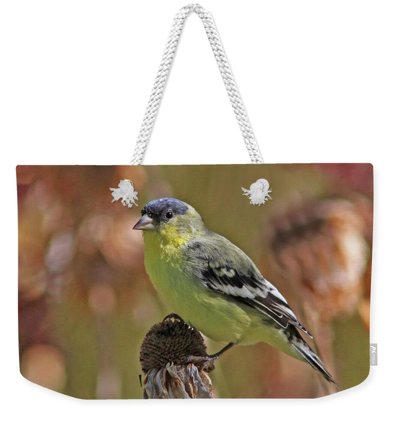 Lesser Goldfinch Weekender Tote Bag featuring the photograph Lesser Goldfinch by Gary Wing