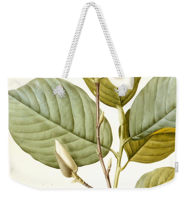 Magnolia Weekender Tote Bag featuring the painting Magnolia by Pierre Joseph Redoute