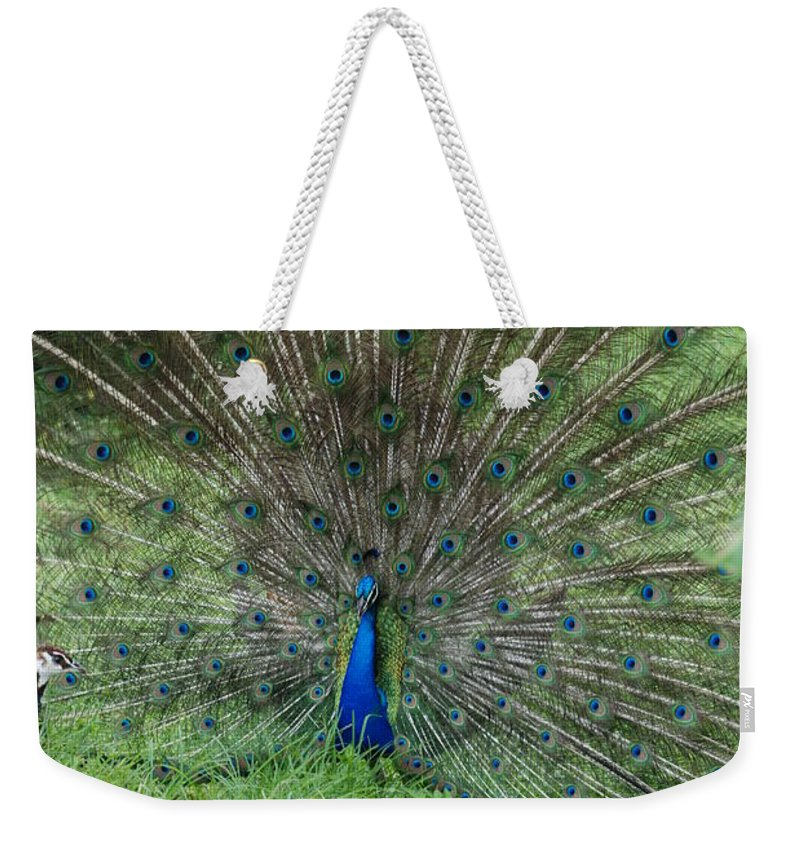 Animals Weekender Tote Bag featuring the photograph 2 Peacocks And A Black Pussy Cat by Rob Hans