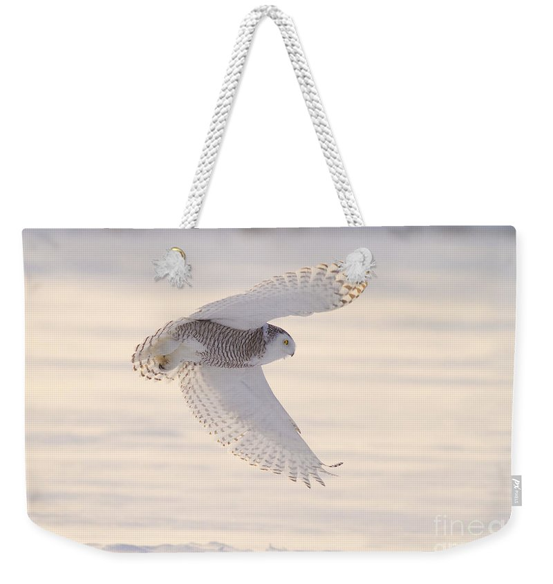 Snowy Owl Weekender Tote Bag featuring the photograph Snowy Owl In Flight by Marie Read