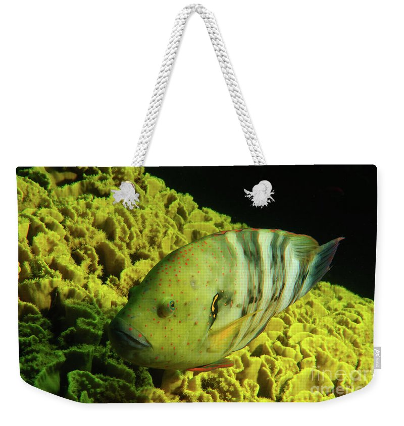 Underwater Weekender Tote Bag featuring the photograph Underwater Photography by Hagai Nativ