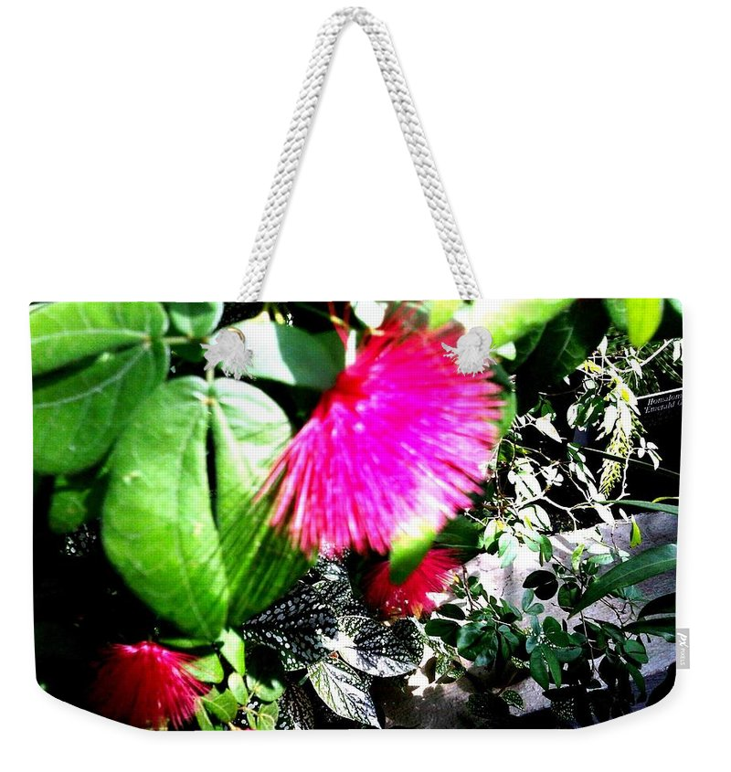 Bonsai Photo Weekender Tote Bag featuring the photograph Brooklyn Garden by Lord Frederick Lyle Morris