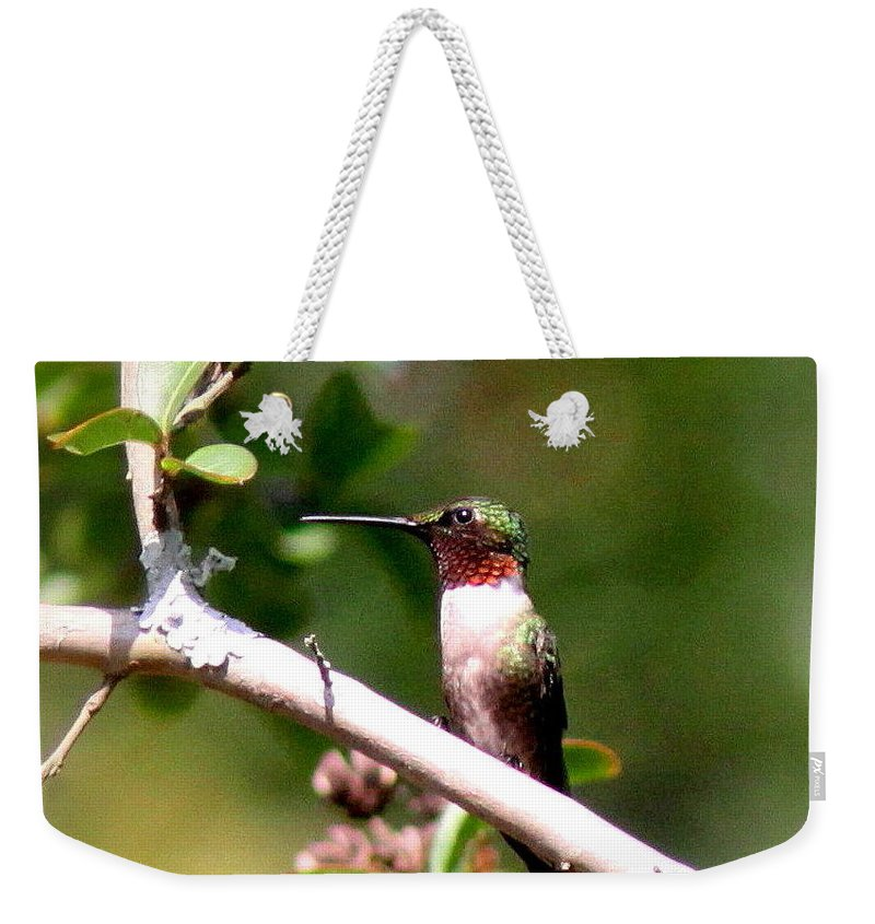 Hummingbird Weekender Tote Bag featuring the photograph 2274 - Hummingbird by Travis Truelove