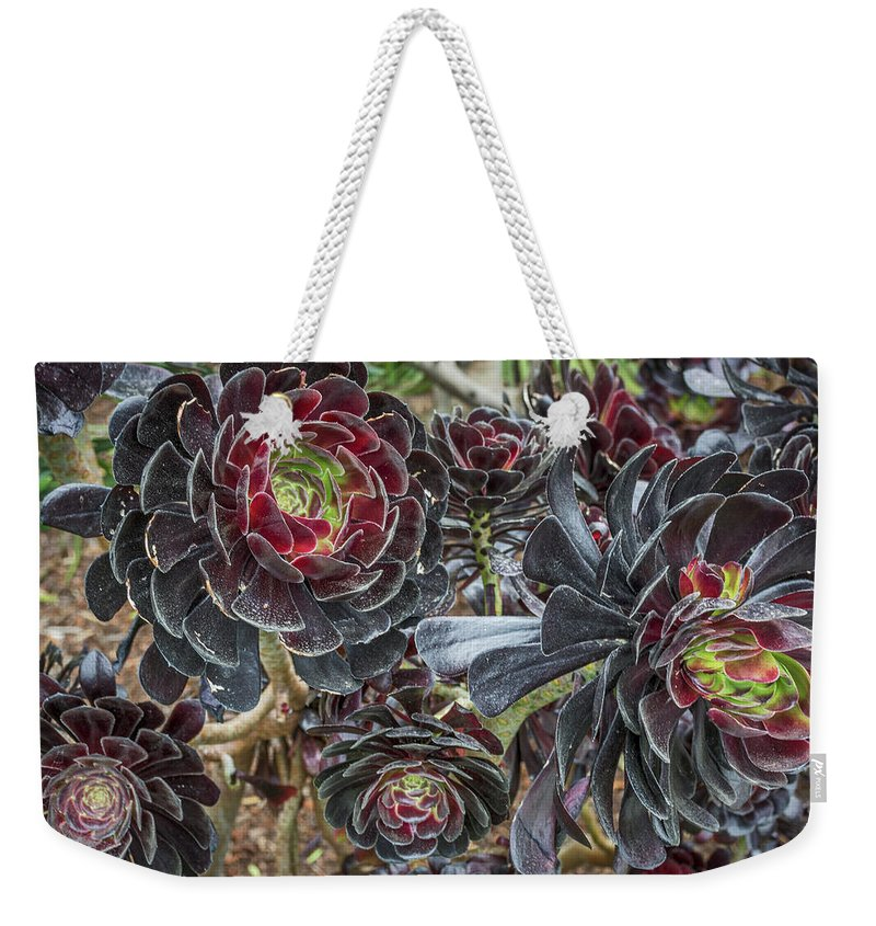 California Weekender Tote Bag featuring the photograph 2543- Cactus Flower by David Lange
