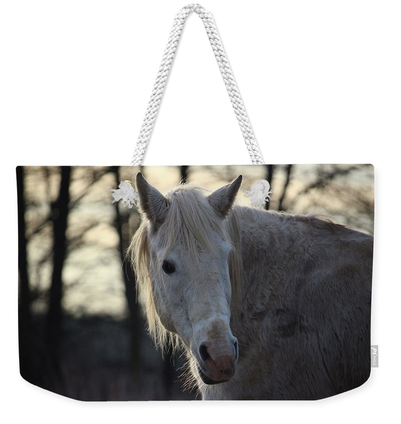 Horse Horses Weekender Tote Bag featuring the photograph Horse by FL Collection