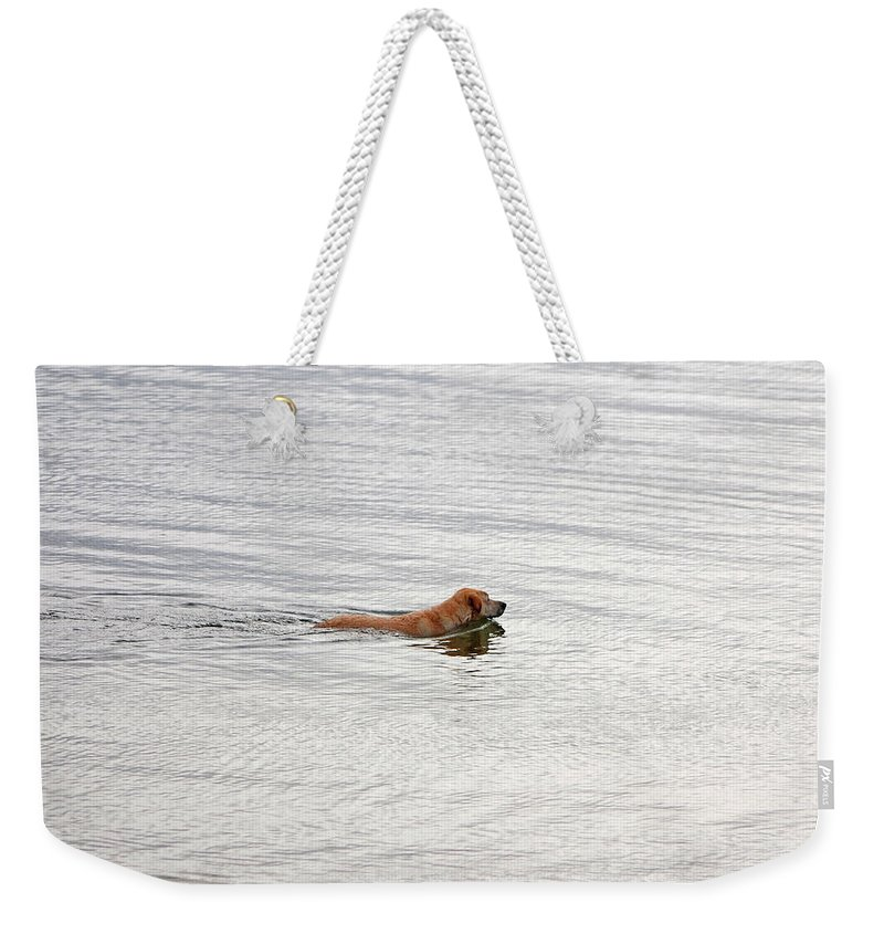 Golden Labrador Retriever Weekender Tote Bag featuring the photograph 3 - Golden Lab Lovin Life by Joseph Keane