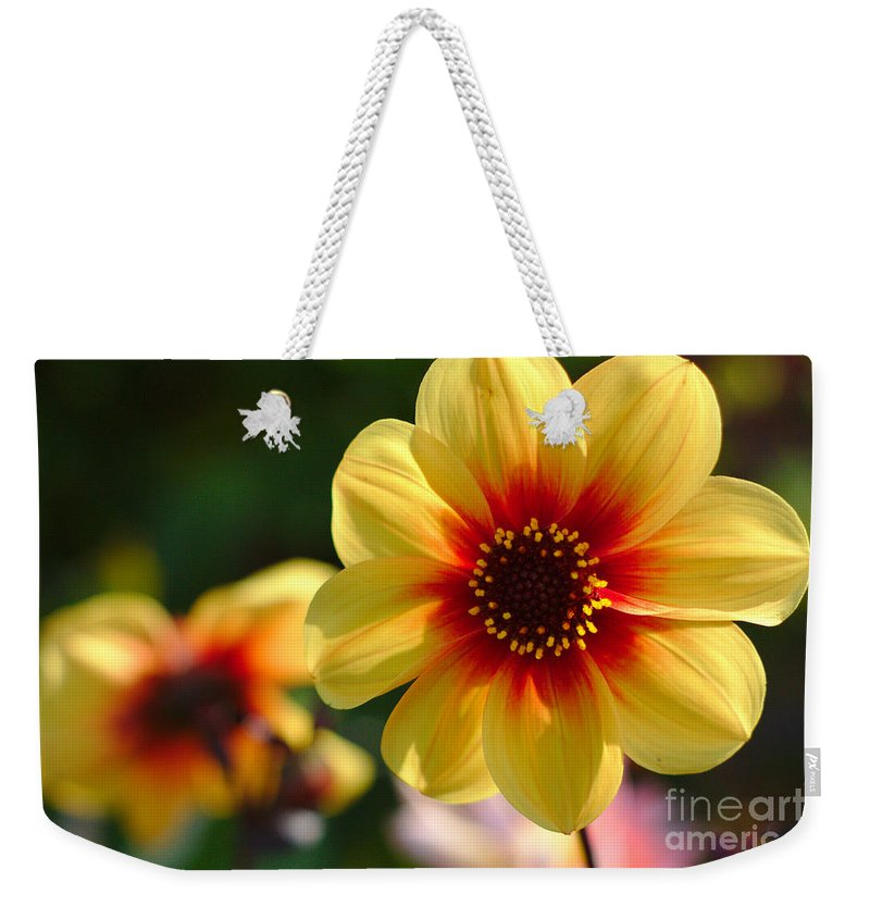 Flowers Weekender Tote Bag featuring the photograph Autumn Flowers by Jeremy Hayden