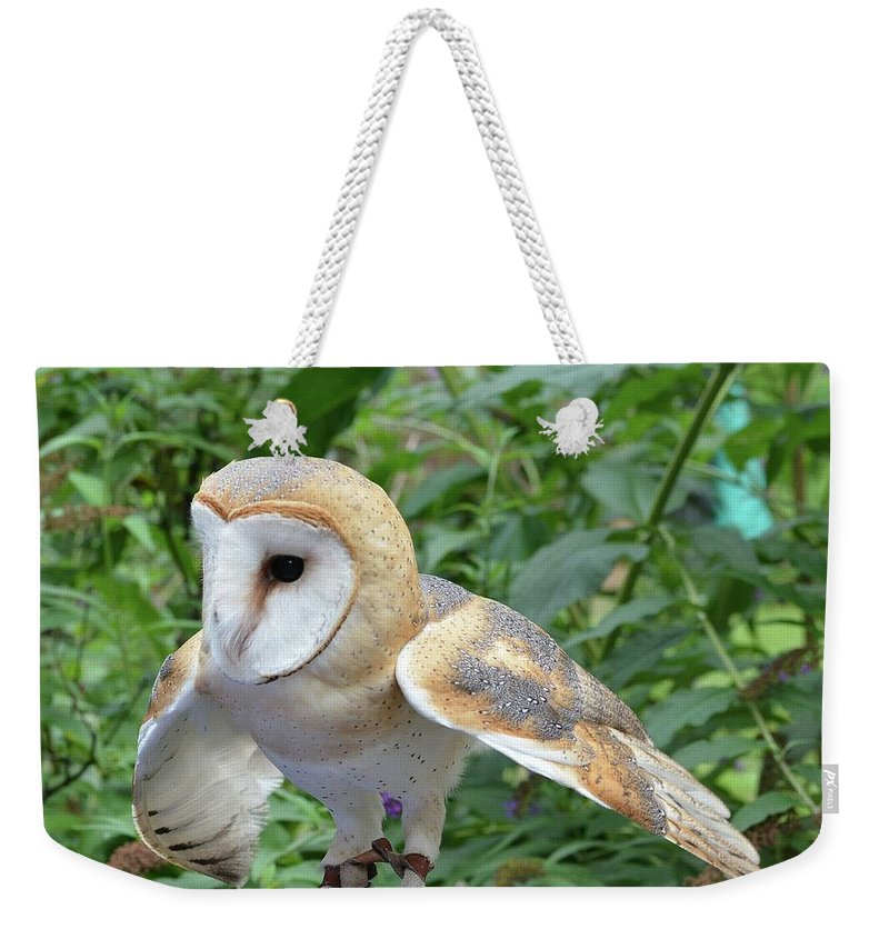 Barn Weekender Tote Bag featuring the photograph Barn Owl by Philip Ralley