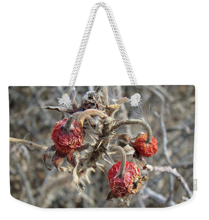 Rose Weekender Tote Bag featuring the photograph Beach Rose Hips - Rosa Rugosa by Mother Nature