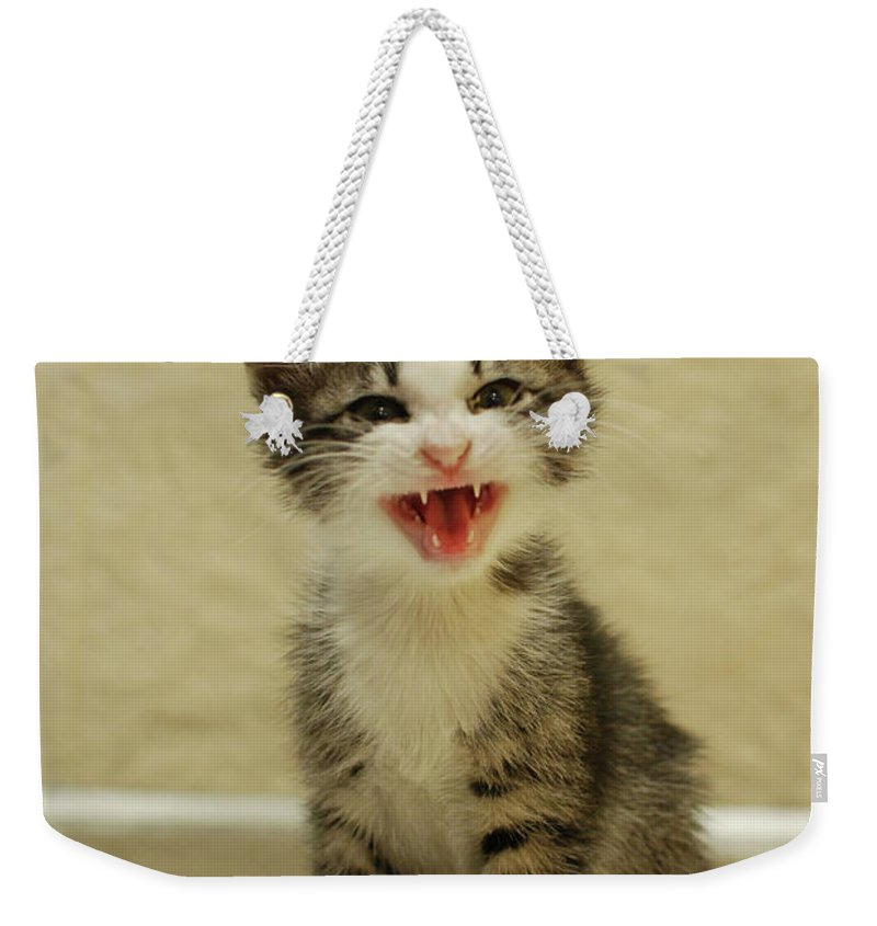 Cat Weekender Tote Bag featuring the photograph 3 Day Old Kitten by Amir Paz