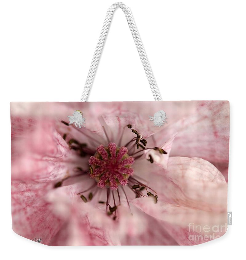 Mccombie Weekender Tote Bag featuring the photograph Double Dusty Rose Poppy From The Angel's Choir Mix by J McCombie