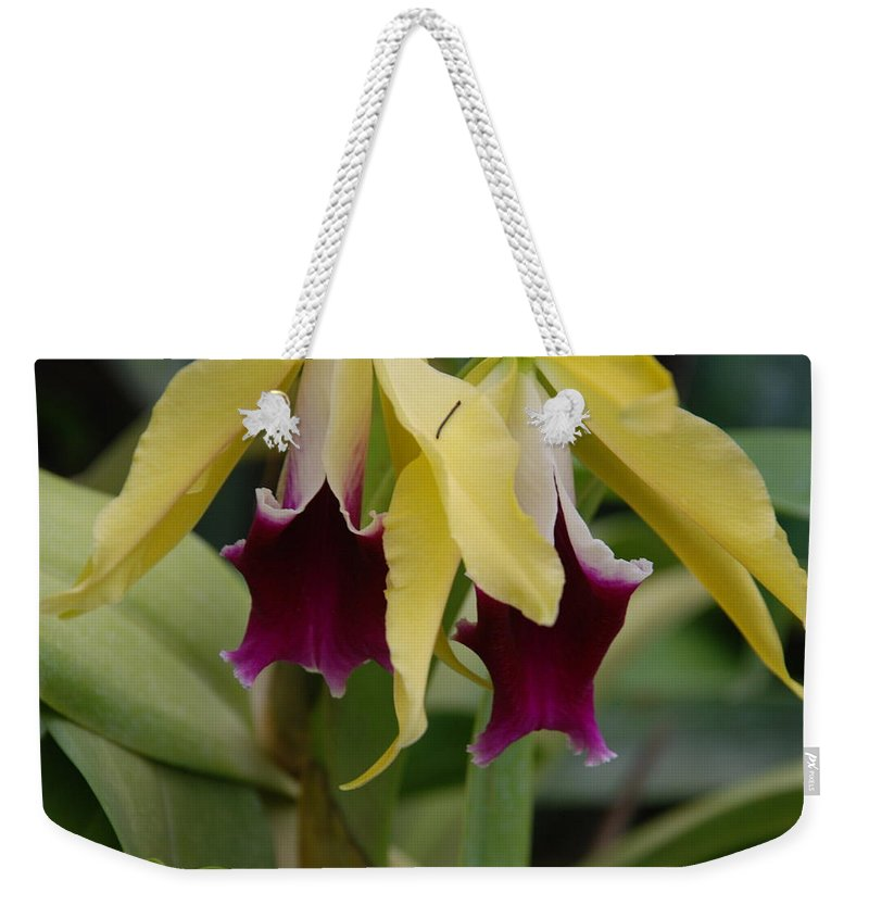 Macro Weekender Tote Bag featuring the photograph Double Orchid by Rob Hans