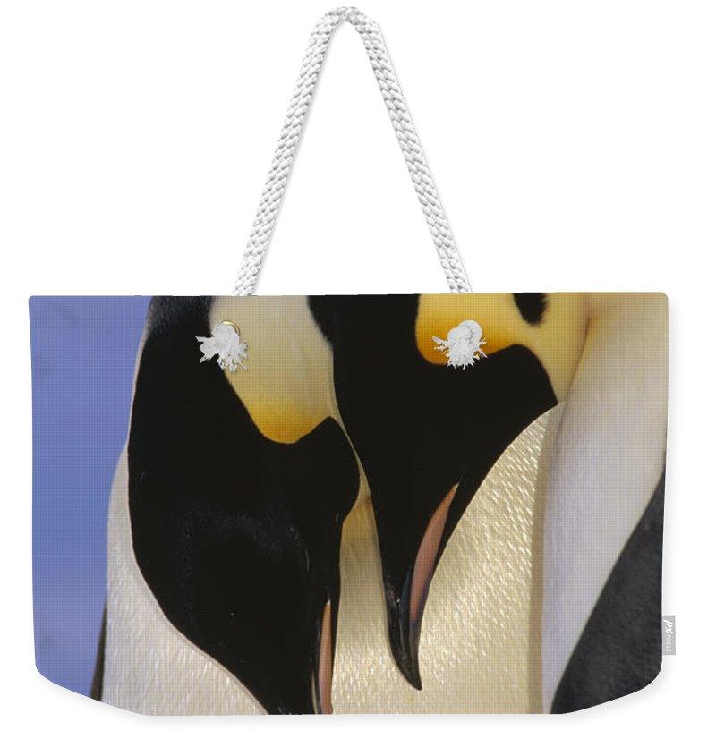 Mp Weekender Tote Bag featuring the photograph Emperor Penguin Aptenodytes Forsteri by Tui De Roy