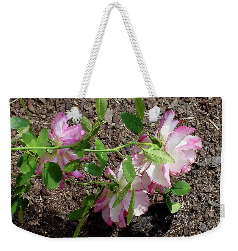 Fallen Weekender Tote Bag featuring the photograph 3 Fallen Roses by Shirley Heyn