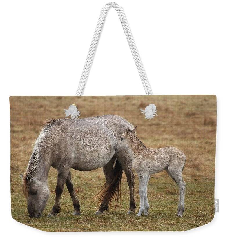 Horses Weekender Tote Bag featuring the photograph Horses by FL collection