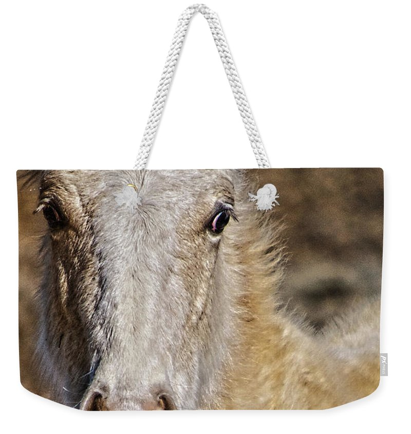 Santa Weekender Tote Bag featuring the photograph Red Willow Pony by Charles Muhle