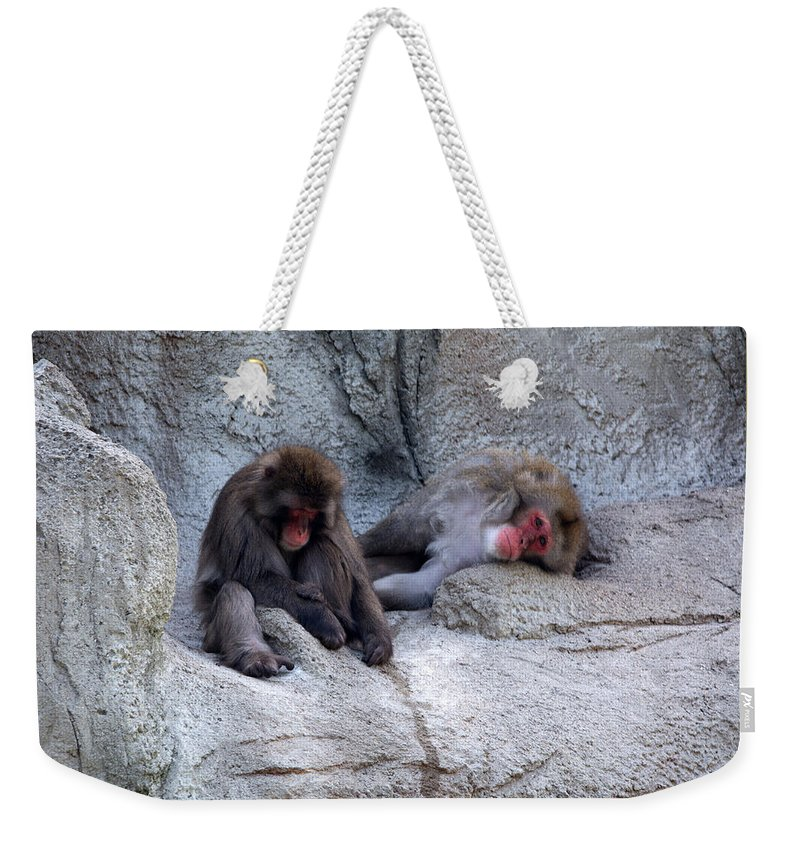 Yellowstone National Park Weekender Tote Bag featuring the photograph Resting by Linda Kerkau